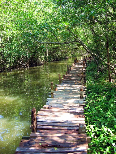Ha!  This walkway looks exactly like my dock thru the swamp in Texas!  Same vegetation too!