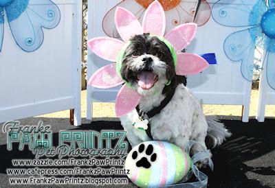 HSSC Doggie Easter Egg Hunt 2010 www.SayWoofPetography.com