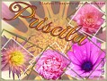 Priscila LWflowers