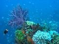 Nice Soft Coral