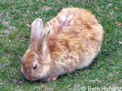 Bunny001