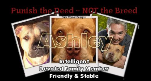 dcd-Ashley-PitBull