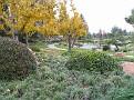 Woodley Park Japanese Gardeni016
