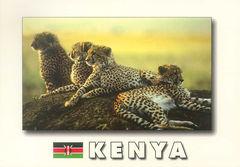 Kenya - CHEETAH NA