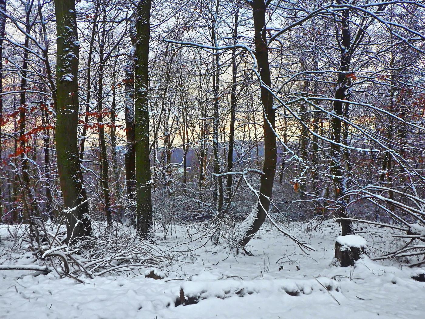 Ottensteiner Wald