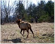 Sonny Austin and Paul Lay watching the Elk trot away.