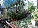 048 some cacti