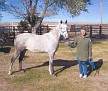 SHALIMAR CASINO #633272 2005 grey gelding by Shalimar Mine